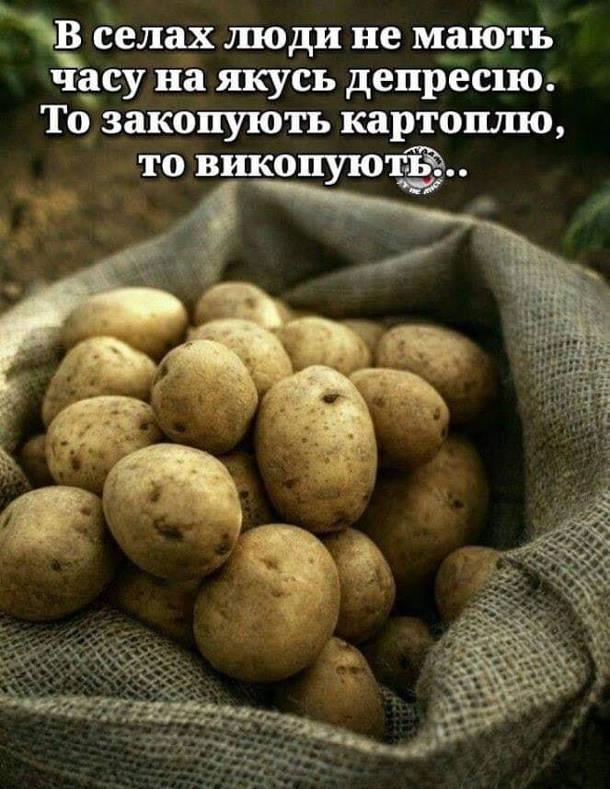 Жарт про село. В селах люди не мають часу на якусь депресію. То закопують картоплю, то викопують